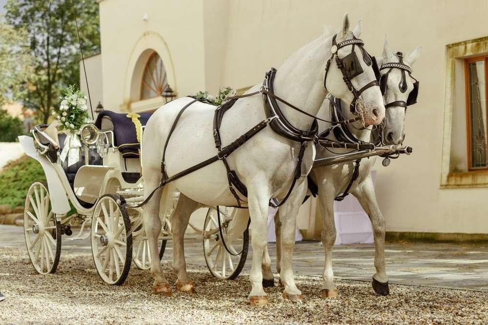 Für eine traditionelle Hochzeit ist eine Kutsche, die von weißen Schimmeln gezogen wird, das richtige Gefährt